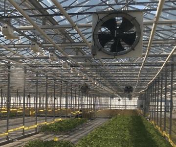 Greenhouse ventilation, air circulation and air distribution Enerdes