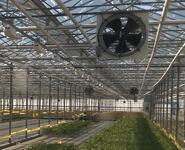 Greenhouse ventilation, air circulation and air distribution Enerdes