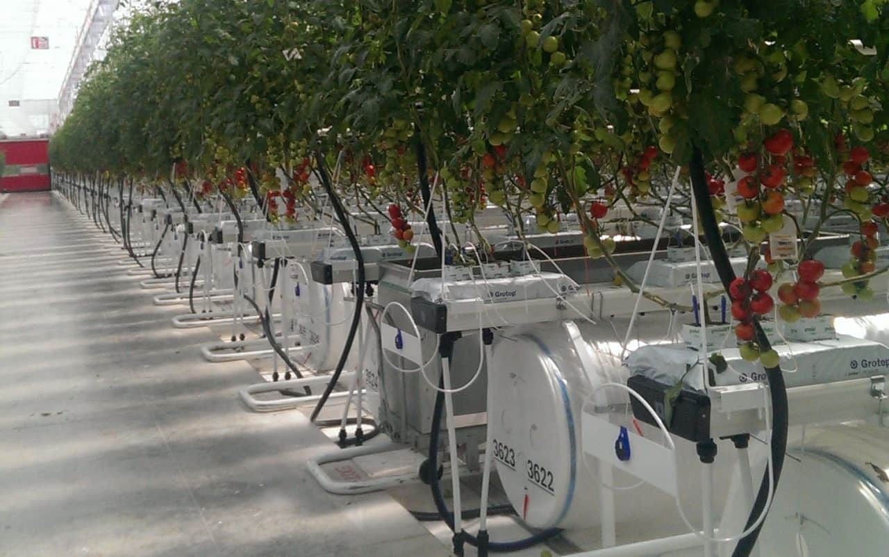 Greenhouse climate control systems Enerdes